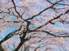 [Opinion] 봄, 취하다. [문화전반]