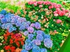 [Opinion] 꽃과 함께한'고양' [문화전반]