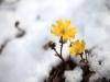 [Opinion] 겨울에 피는 꽃 [문화 전반]