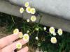 [보암보암] 돌로 버려지면 어쩌나, 꽃으로 피었으면