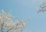 #23 잘가요, 나의 봄.