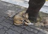[Dear Diary] 고양이의 낮잠