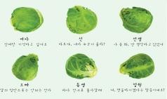 (~06.25) 연극 '양배추의 유례' [대학로 선돌극장]