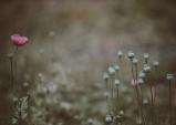 [Opinion] 흙으로 쌓인 대화, < 꽃잎이 떨어져도 꽃은 지지 않네 > [문학]