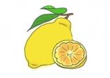 [palette] 첫 번째 색깔, Lemon (上)