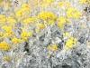 [그대 삶의 쉼표] 희생으로 아름다운 꽃