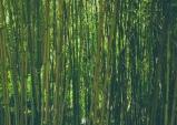 [Opinion] 대나무숲, 그 익명의 폭력성 [문화 전반]