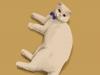 [일상의 액자] 고양이 테라피