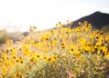 [Opinion] 시詩로 그리는 나의 봄 [문화 전반]