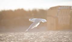 [음악상담소] 마지막 이야기, 힘찬 날갯짓