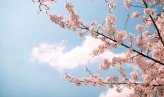 [덕행] 봄과 함께 할 '사랑' 노래