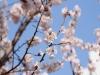 봄날의 기억