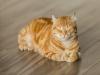 [YouTube Gallery] 02. 고양이는 완벽해