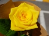 [월간 사랑] 02 : 꽃