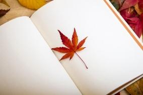 [독서경영]의 특별한 신간 큐레이션 - 경제 경영 / 자기계발