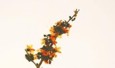 [Opinion] 가을에 어울리는 노래 [음악]