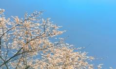 [그대 삶의 쉼표] 봄이 오다