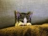 [Review] 고양이를 위해서라면, 멍청해지겠습니다 - 멍청한 인간들과 공존하는 몇 가지 방법