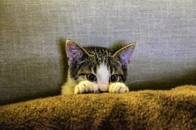 [Review] 어느 고양이 작가의 뼈때리는 인간 통찰 : 멍청한 인간들과 공존하는 몇 가지 방법