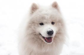 """[Opinion] 내 맘대로 쓰는 강아지 단편선 """"행복한 세상의 강아지"""" [문화 전반]"""