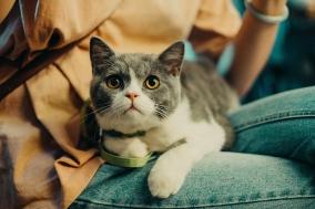 [Review] 책을 읽고 괜히 한 번 고양이를 약올렸다 - 멍청한 인간들과 공존하는 몇 가지 방법