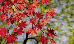 [Opinion] 코를 훌쩍, 가을이 왔나 보다 [사람]
