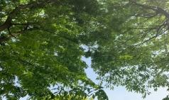 [ART insight] 그리운 여름이 생겼다