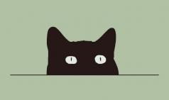 [도서] 나는 슈뢰딩거의 고양이로소이다