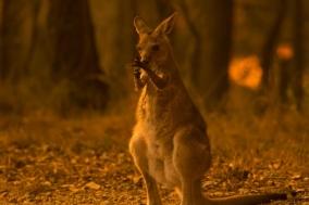 [Opinion] 인간은 호주를 시작으로 동물을 멸종시킨다 [동물]