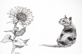 [So & Ji] 노란 길 고양이, 노란 해바라기