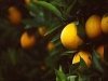 [에세이] 오렌지, 오렌지, 오렌지.