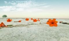 [ART Insight] 사막의 꽃