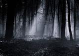 [Preview] 서울국제대안영상예술축제, 어두운 숲으로 들어가기