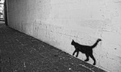 [Opinion] 나는 고양이를 두 번 다신 키우지 않을 것이다 [동물]