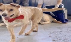 [PRESS] 동물병원 이야기 - 사연 많은 귀여운 환자들을 돌보고 있습니다