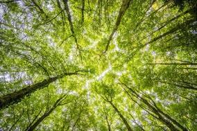 [PRESS] 식물 존재에 관한 두 철학자의 대화, 식물의 사유