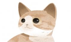 [에이밀기] Animal Drawing