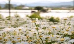 [Review] 나를 살게 해준 꽃들의 노래 - 시가 나에게 살라고 한다