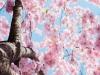 [Opinion] 종이에서 봄바람이 느껴졌다 : 오후도 서점 이야기 [도서]