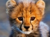 [Opinion] 생존이 시작되는 시간 - Animal Babies [동물]