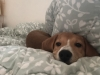 [Opinion] 콘칩향이 나는 강아지는 평소 무엇을 먹을까 [동물]