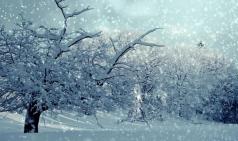 [Opinion] 나의 겨울 음악 [음악]