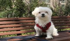 [Opinion] 우리 집 강아지가 불쌍해 [동물]