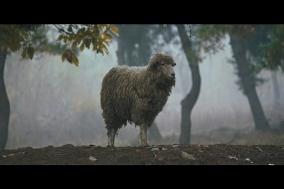 [영화] 정말 먼 곳