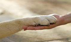 [칼럼] 할말,잇슈(issue)다! 06 - 동물 윤리, '내일'의 이야기가 아니라 '내 일'처럼 받아들여야 하는 이야기