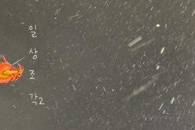 [일상 조각] 눈을 좋아하세요...