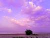 [에세이] 세상이 멸망하는 날, 초능력이 발현된 사람들 - 꿈 일기 (1)