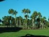 [Opinion] 내 생애 가장 행복했던 순간들 (1) 플로리다 여행기 [여행]