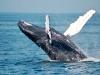 [리뷰] '고래가 가는 곳'은 어디인가 [도서]