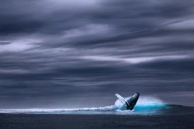 [Review] 다시 시작된 지구의 항해 - 고래가 가는 곳 [도서]